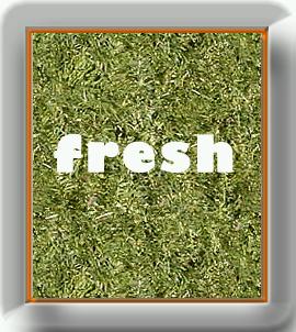 Freshsticker